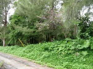 緑豊かな大野山林