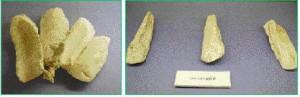 アラフ遺跡から出土した貝斧(右)、1カ所に収納した形で見つかった貝斧(左)=宮古島市総合博物館で常時展示