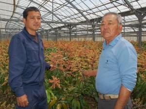 満開したマンゴーの花をバックに父下地健市さん(右)と長男一武さん