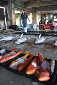 高級魚のアカジンミーバイなどが上場されて活気づいた=22日、宮古島漁協の魚市場