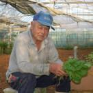 葉野菜の収穫をする池村さん