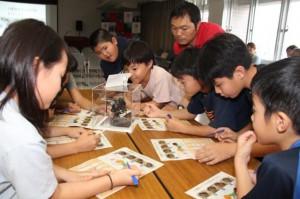 アリの種類を当てるため標本を観察する参加者ら=16日、県宮古合同庁舎講堂