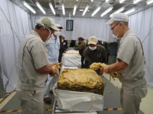 21年産葉タバコの買い入れが始まった=27日、日本たばこ産業宮古葉たばこ取扱所(写真提供・JT沖縄地方原料本部)