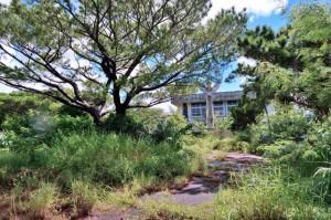 雑草が繁茂し「森になっている」との指摘を受けた旧伊良部小=17日、伊良部島